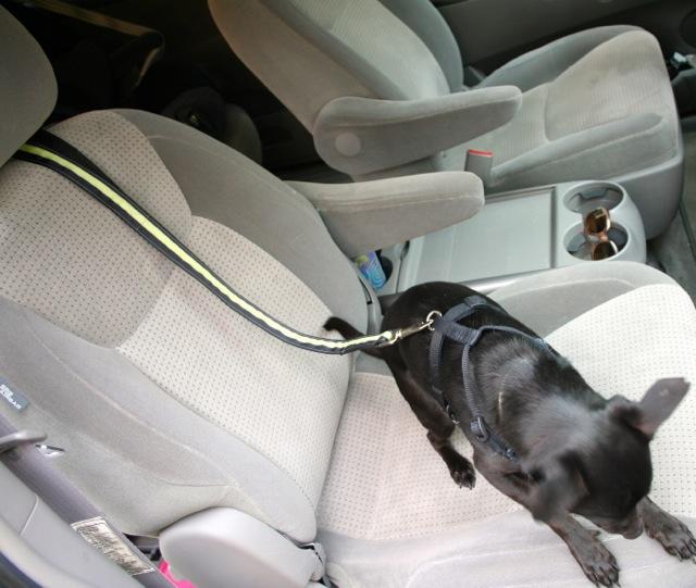 Dog Barks In Car At Cars